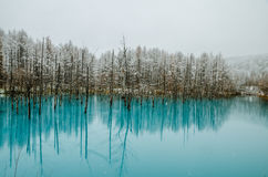 Пруд сини Biei Стоковые Изображения