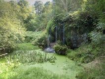 Пруд с водопадом стоковые фотографии rf
