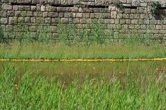 Пруд с желтыми цветками и кирпичной стеной стоковое изображение rf