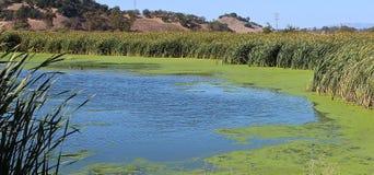 Пруды болота в San Rafael, Калифорнии Стоковое Изображение