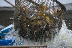 Пруд для рыбалки Стоковые Изображения