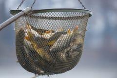 Пруд для рыбалки Стоковая Фотография RF