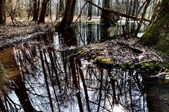 пруд Стоковая Фотография