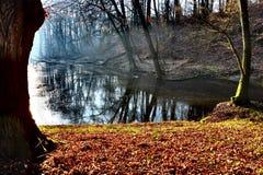 пруд Стоковые Фото