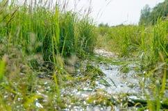 пруд Стоковая Фотография RF