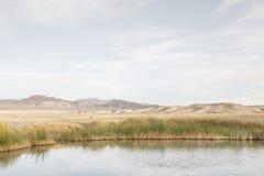 пруд Стоковые Фотографии RF