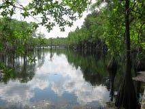 Пруд Cypress Стоковое Изображение
