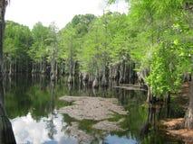 Пруд Cypress Стоковая Фотография