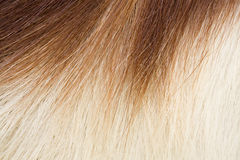 прыгун волос Стоковое фото RF