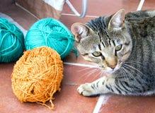 пряжа кота Стоковые Изображения RF