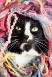 пряжа кота Стоковая Фотография RF