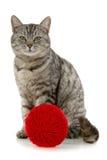 пряжа пасма кота красная Стоковые Фотографии RF