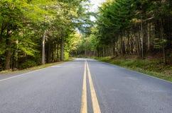 Прямая дорога леса стоковое фото rf
