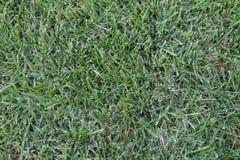 Прямой вниз взгляд зеленой травы Стоковая Фотография RF