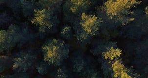 Прямой вниз вид с воздуха смешанные твёрдые древесины и лес хвои на заходе солнца осени акции видеоматериалы