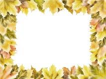 Прямоугольная рамка кленовых листов осени Стоковое фото RF