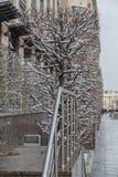 прямоугольное декоративное дерево в зиме стоковое изображение rf