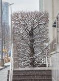прямоугольное декоративное дерево в зиме стоковая фотография