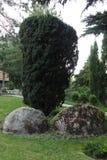 Прямоугольный куст и 2 больших камня на дне Вероятно th Стоковая Фотография
