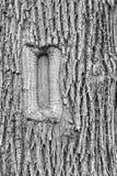 Прямоугольный шрам на стволе дерева Стоковые Изображения