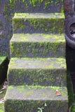 Прямые влажные шаги при преследовать водоросли и прессформа - плохая крытая окружающая среда - и ужас - больной синдром здания стоковые изображения