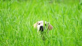 Прятать в траве Стоковое Изображение