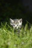 прятать кота Стоковое фото RF