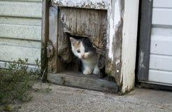 Прятать котенка Стоковые Фотографии RF