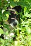 Прятать щенка стоковое изображение rf