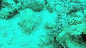 Прятк с Epinephelus Marginatus в Греции 2 видеоматериал
