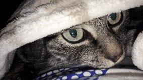Пряча кот Стоковые Фото