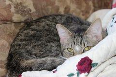 Пряча кот Стоковое Изображение RF