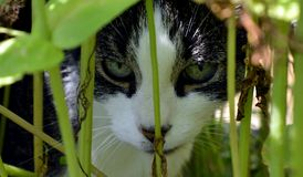 Пряча кот Стоковые Изображения