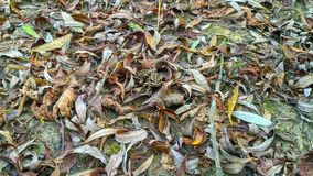Пряча лягушка стоковое фото rf