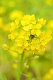 Пряча насекомые Стоковые Фото
