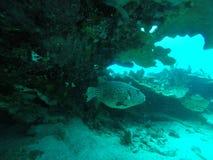Пряча рыбы Стоковая Фотография RF