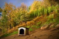 псарня собаки Стоковые Фото
