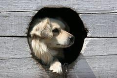 псарня собаки Стоковая Фотография RF