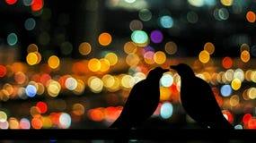 Птица абстрактных пар силуэта бессонная Стоковые Изображения