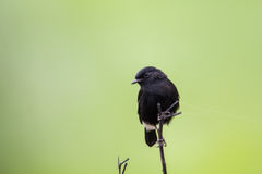 Птица Азии стоковое фото