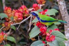 Птица Азии стоковое изображение