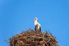 Птица аиста в гнезде Стоковые Изображения