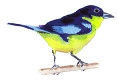 Птица акварели Стоковое Изображение