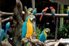 Птица ары сини и золота сидя на ветви дерева в лесе Стоковые Изображения RF