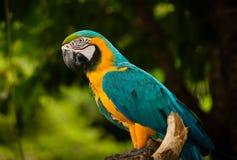 Птица ары стоковое изображение