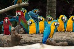 Птица ары стоковое фото rf