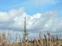 Птица баклана в болоте, Литве Стоковое фото RF