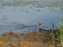Птица бежать прочь Стоковые Изображения RF