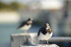 Птица берега отдыхая на штендере цемента стоковые изображения
