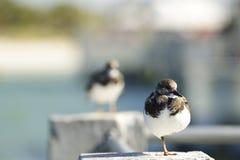 Птица берега отдыхая на штендере цемента стоковая фотография